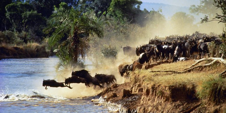 great-migration-courtesy-kenya-tourism